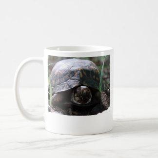 taza de la tortuga de caja