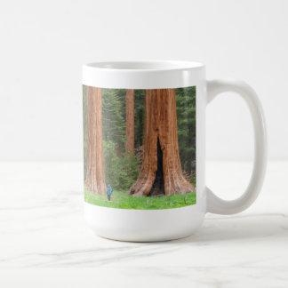 Taza de los árboles de la secoya