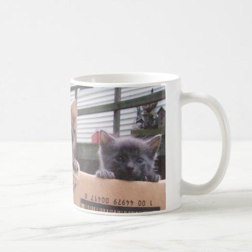 Taza de los gatitos