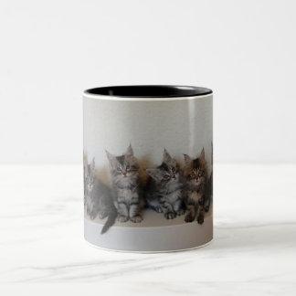 Taza de los gatitos del Coon de Maine