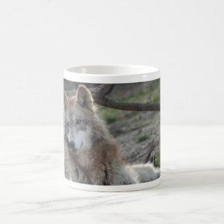 Taza de los lobos de la taza del lobo