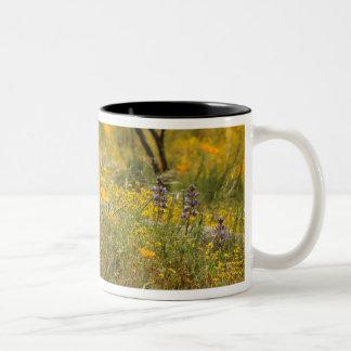 Taza de los Wildflowers de las amapolas