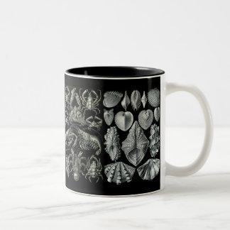 Taza de Natur del der de Ernst Haeckel
