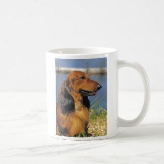 taza de pelo largo roja del dachshund