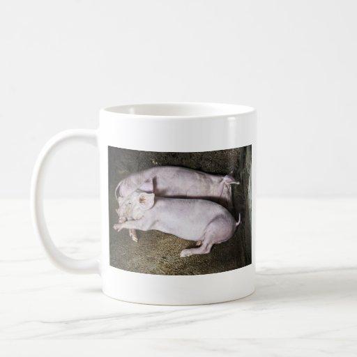 Taza de reclinación de los cerdos