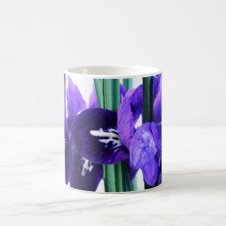 Taza de Reticulata del iris