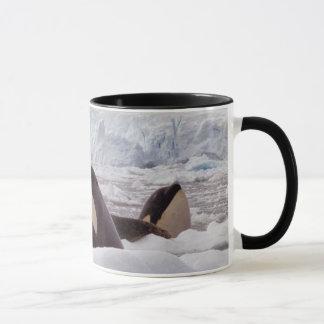 Taza de Spyhopping de las orcas