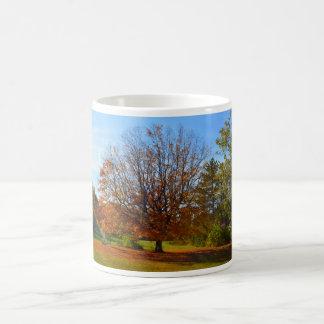 Taza del árbol del otoño