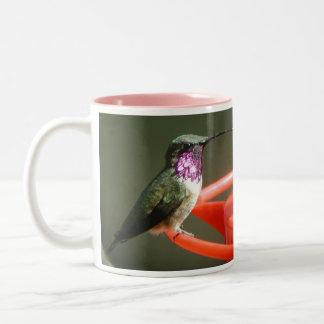 Taza del colibrí de Lucifer, izquierdo-dirigida
