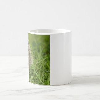 taza del erizo