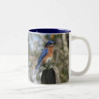 Taza del este del varón del Bluebird