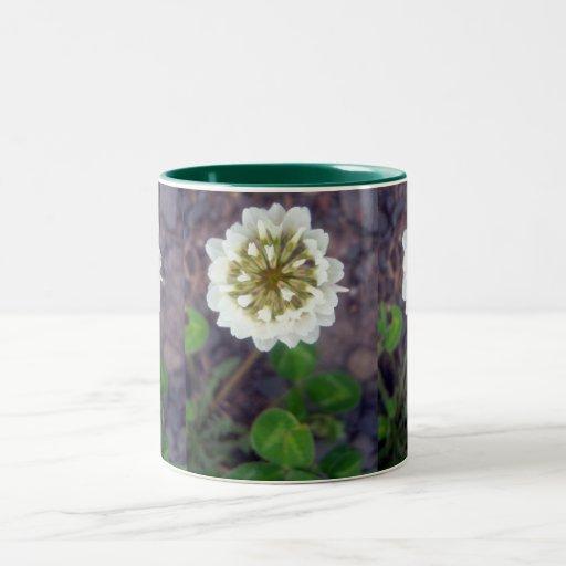 Taza del flor 1 del trébol blanco