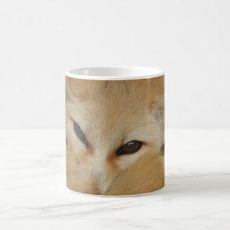 Taza del Fox de Fennec