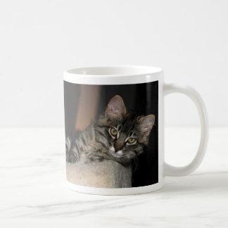 Taza del gatito de Kimber Chillin