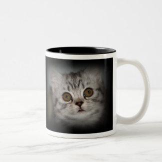 Taza del gatito del Tabby