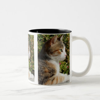 Taza del gato de Cleo