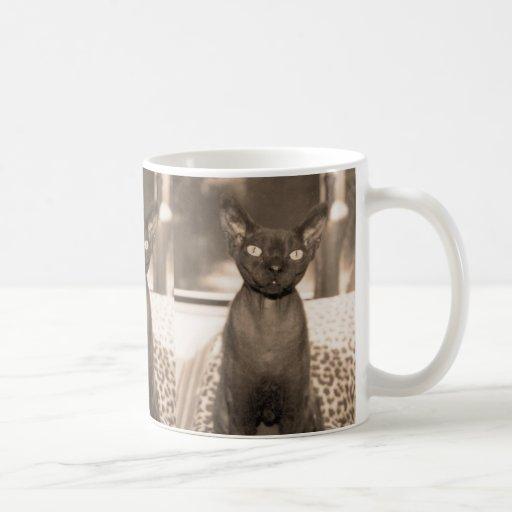 Taza del gato de Devon Rex de la sepia