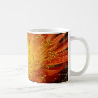 taza del hawkweed anaranjado