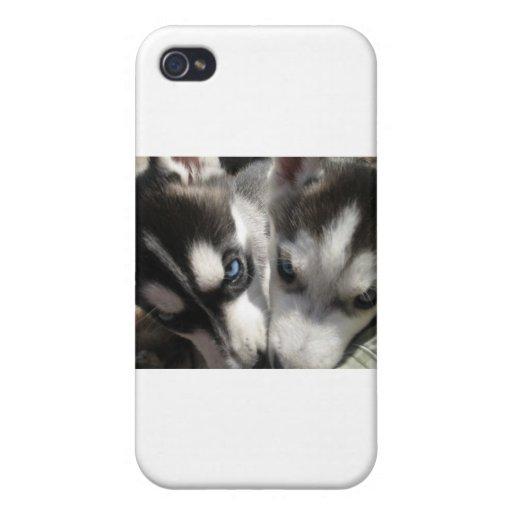Taza del perrito del husky siberiano iPhone 4 funda