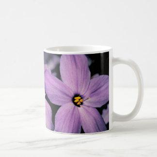 Taza del Phlox del arrastramiento flores púrpuras