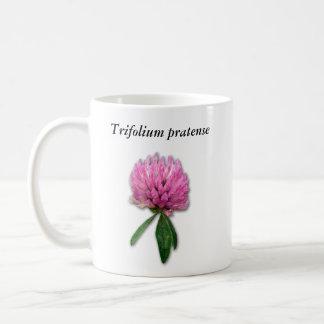 Taza del pratense del Trifolium