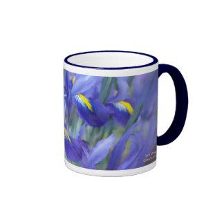 Taza del ramo del iris