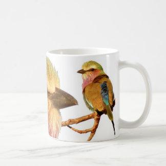 Taza del rodillo de la Lila-breasted (pájaro afric