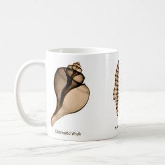 Taza del Seashell de la radiografía con bucino, el