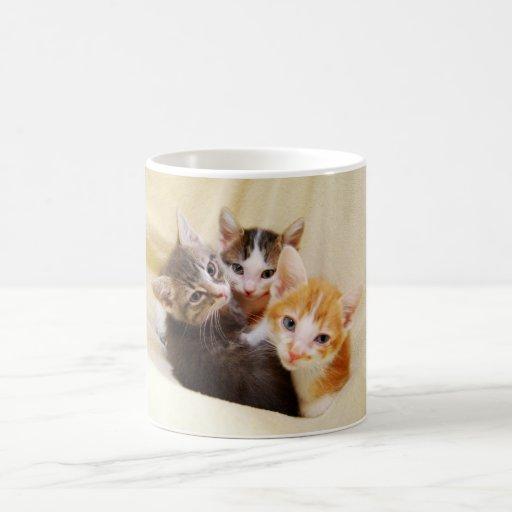 Taza del trío del gatito