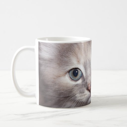 taza dulce del gatito