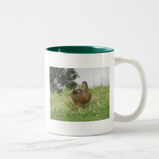 Taza femenina del pato del pato silvestre