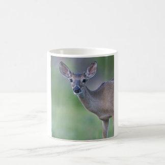 Taza joven de los ciervos de la Blanco-cola