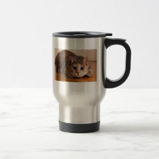Taza juguetona del gato