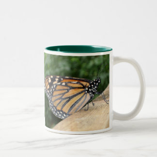 Taza - mariposa de monarca