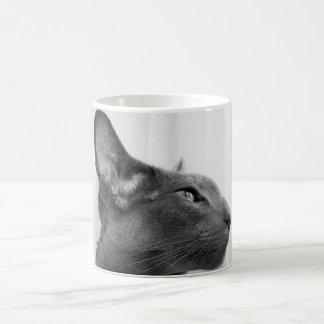 Taza oriental del gato de Shorthair