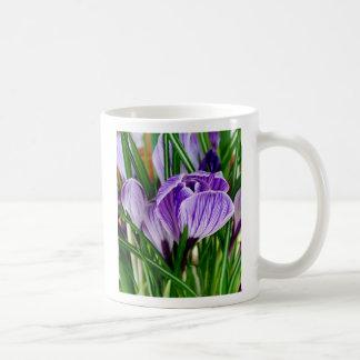 Taza púrpura de la flor del azafrán de los pétalos