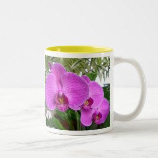 Taza púrpura de la orquídea