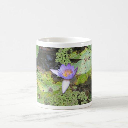Taza púrpura del lirio de agua