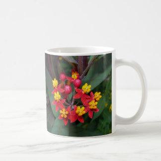 Taza roja y amarilla de la flor (mala hierba de ma