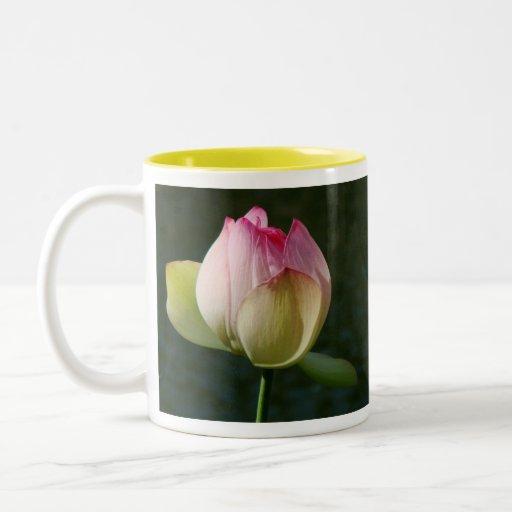Taza rosada de la flor de Lotus