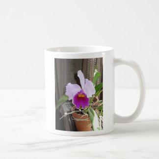 Taza rosada de la orquídea