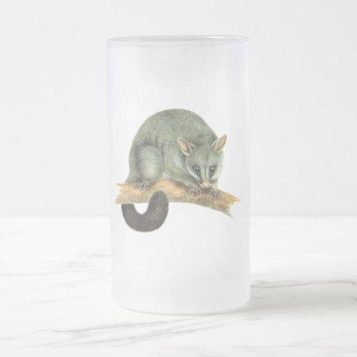 Tazas - oposum cooroy