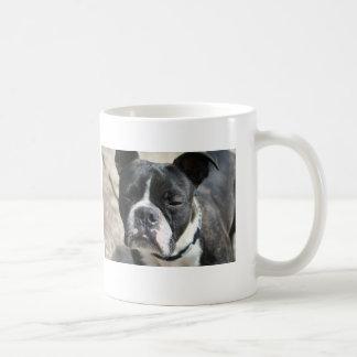 TAZmanian Terrier Mugs