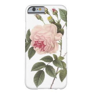 (TBA) Redoute Rose 2 iPhone 6 Case