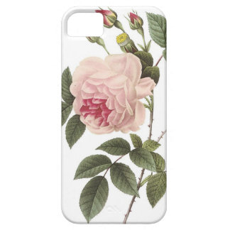 (TBA) Redoute Rose 2 iPhone 5 Cover