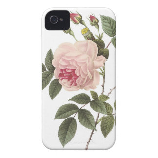 (TBA) Redoute Rose 2 Case-Mate iPhone 4 Cases