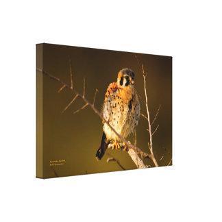 TCWC – American Kestrel at Sunset Canvas Print