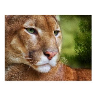 TCWC - Arte del león de montaña del puma Postal