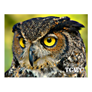 TCWC - Great Horned Owl with Logo Postcard
