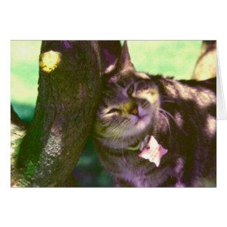 Te amo gatito de la mamá tarjeta pequeña